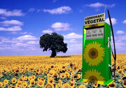 Les biocarburants aggravent-ils les famines ? 0xha5cpo